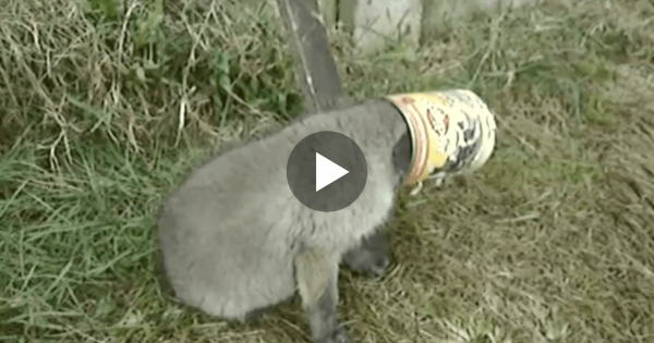 He Saved A Tiny Fox From Tin Can.. The Fox's Reaction? I Never Expected THIS..