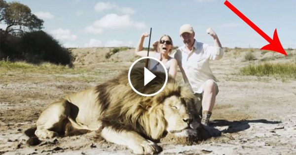 "Hunters Pose For A ""Trophy"" Picture After Killing A Lion. What Follows Seconds Later.. Oh My God!!"