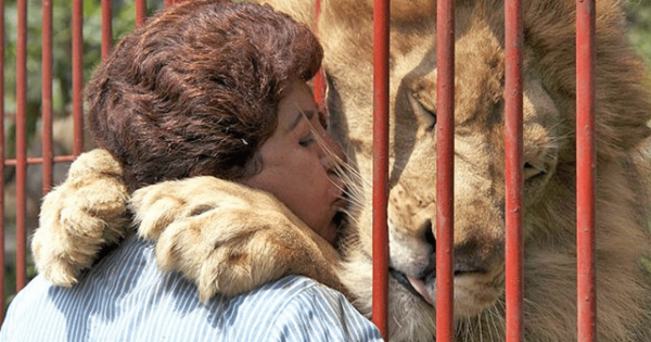 Woman Visits Lion She Rescued Years Ago. What He Does Will Give You All The Feels