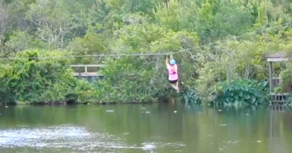 Zip Liner Has No Clue Alligator Lurking in Pond Below, Then He Leaps Out to Bite Her in Terrifying Footage