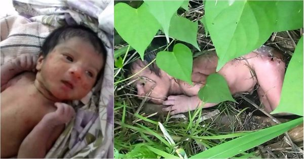 Man Finds Baby Girl Abandoned in Thorny Bushes. The Reason Her Evil Parents Did This Is Unforgivable