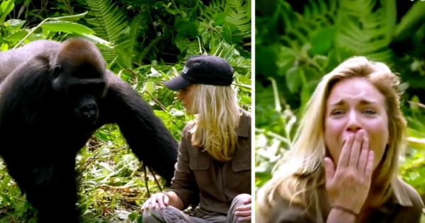 He Raised Wild Gorillas For 6 Years. Despite The Warnings, He Introduces Wife, But Then She Gets Too Close..