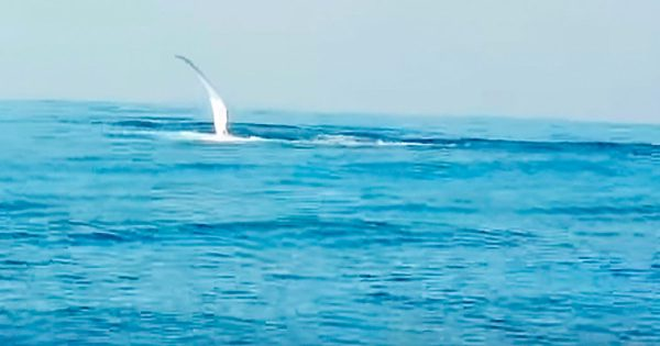 Man points camera on the ocean when a fin suddenly pops out, the next goes instantly viral