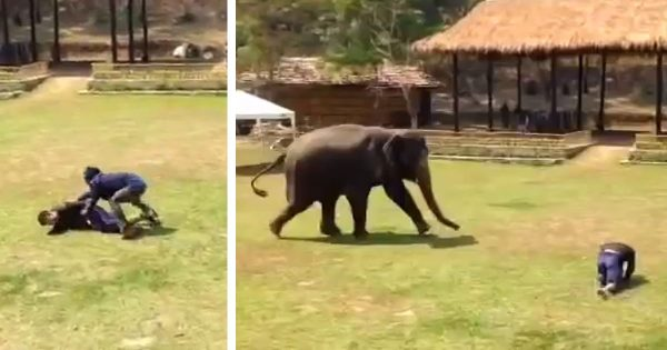Elephant notices her caregiver being attacked, runs to the rescue in incredible video footage