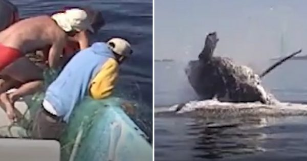 Family saves nearly-dead humpback whale trapped in net. Now watch when she says 'Thank You' in most incredible way