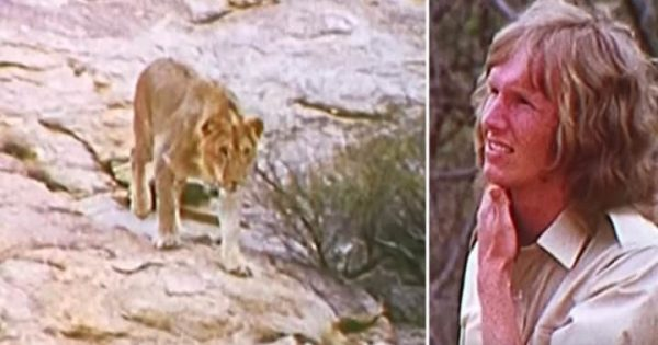 Years after saving lion's life, rescuers meet him again – ignore warnings and get too close