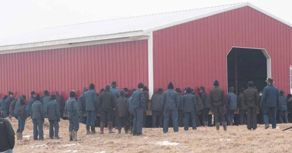 250 Amish men lift barn with their bare hands and move it 150 feet across a farm in one piece