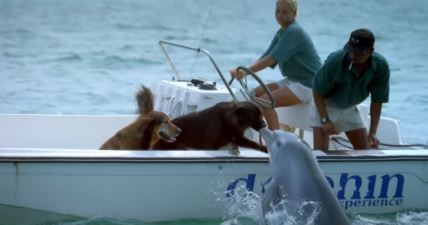 Dolphin Comes Out of The Sea and Kisses a Dog in a Boat in The Nose