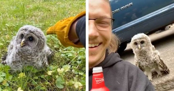 A Man Befriend With A Charming Little Owl, They Took a Picture Together