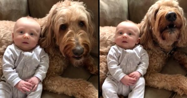 "Mom Asks The Dog Ff He Loves His Little Brother, and The Dog Passionately ""Replies"" Back"