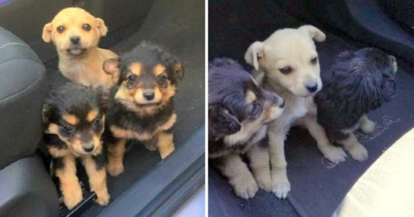 A Man Decides He No Longer Needs The Puppies And Leaves Them On A Busy Street