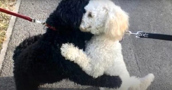 Two Strangers Dogs Locked Paws Around Each Other For a Hug