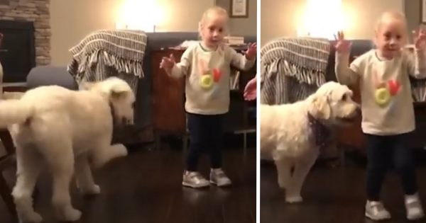 The Dog Is Happy To See His Human Sister Walk For The First Time